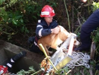Cățel salvat de pompierii tulceni. FOTO ISU Delta